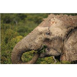 Botswana 14 Day Elephant Hunt - Bill Boycott - Kwatale Safaris