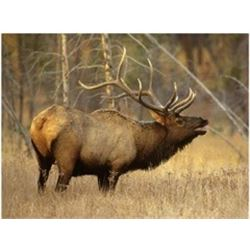 Central Montana 1 Hunter, Fully Guided - Rifle or Archery – Elk & Deer Combo Hunt in 2020