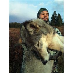 WED-15 Wolf and Coyote Hunt, Alberta