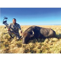 THD-04 Water Buffalo Hunt, Argentina