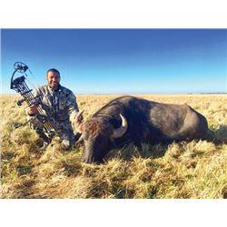 THD-04 Water Buffalo Hunt, Argentina