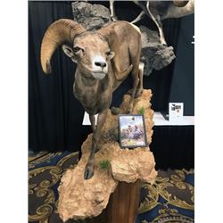 THD-07 Life-Size Sheep Mount