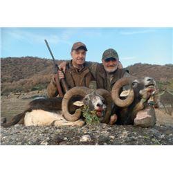 FB-15 European Mouflon Hunt, Macedonia