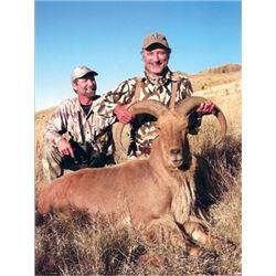 #FB-17 Aoudad Sheep Hunt, Texas