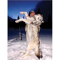 SA-04 Wolf and Coyote Hunt, Alberta