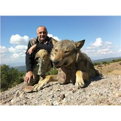 SA-15 Wolf Hunt, Macedonia