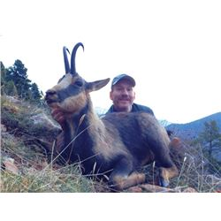 SA-31 Cantabrian Chamois Hunt, Spain