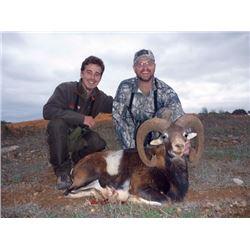 SA-42 Iberian Mouflon Hunt, Spain