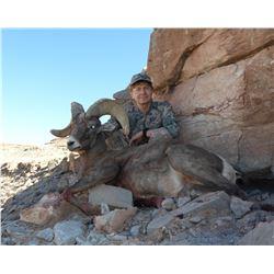 SB-11 Desert Sheep (Nelsoni) Tag, Navajo Nation