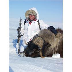 SB-15 Muskox Hunt, Nunavut
