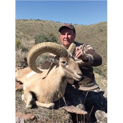 SB-17 Red Sheep or Armenian Mouflon Hunt, Texas