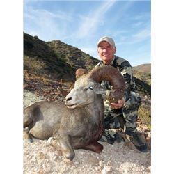 SB-19 Desert Bighorn (Weemsi) Sheep Hunt, Carmen Island, Mexico
