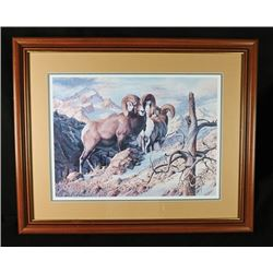 SLA-41 Rocky Mountain Bighorn Print by D. Enright