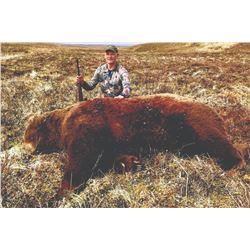 SB-24A Brown Bear Hunt, Alaska