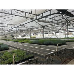 GREENHOUSES 9, 10, 11 & 12: 9-11: APPROX. 80' X 130' HARNOIS AND VARI GREENHOUSE BUILDING; 12: