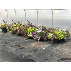 LOT OF APPROX. 11 LARGE POTTED BOUQUETS