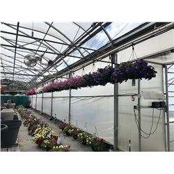 ROW OF APPROX. 27 HANGING BOUQUET BASKETS