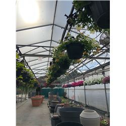 ROW OF APPROX. 47 HANGING BOUQUET BASKETS