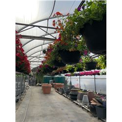 ROW OF APPROX. 40 HANGING BOUQUET BASKETS