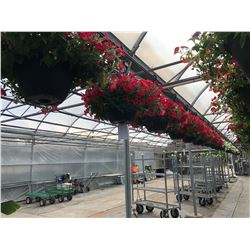 ROW OF APPROX. 28 HANGING BOUQUET BASKETS