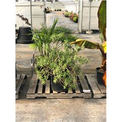 ASSORTED POTTED PLANTS ON PALLET