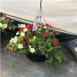 SINGLE HANGING BASKET BOUQUET
