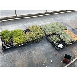 LARGE ASSORTMENT OF PLANTS