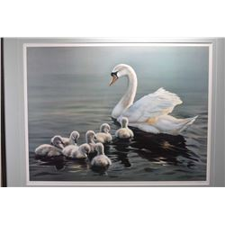 Framed limited edition print of a Swan and cygnets pencil signed by artist Maurade Baynton, 571/2500