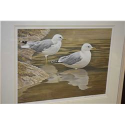 "Framed limited edition print ""Entering the water- Common gulls"" pencil signed by artist Robert Batem"