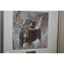 "Framed print ""The Challenge-Bull Moose"" by Robert Bateman"