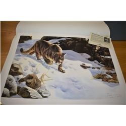 Unframed artist signed printers proof of a Stalking Cougar, pencil signed Maurade Baynton 1/12