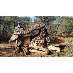 South African Giraffe Hunt with Trophy Fees for 2 Hunters