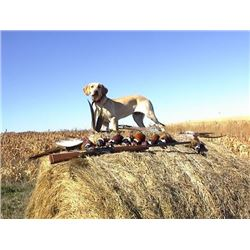 South Dakota Pheasant Hunt for 2 hunters