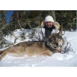 6-night/5-day Trophy Wolf Hunt