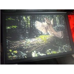 GAME BIRD COLLECTIBLE PRINT / FRAMED