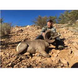 Desert BigHorn Sheep Hunt For 2021