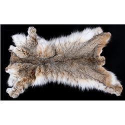 Montana Taxidermy Bobcat Hide