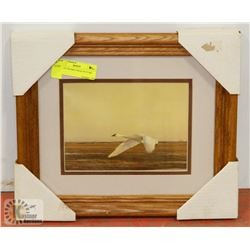 "12"" X 14"" FRAMED SWAN PICTURE"