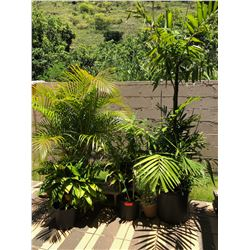 Multiple Potted Plants & Palms