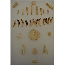 CHUMASH SHELL AND TOOTH ARTIFACTS