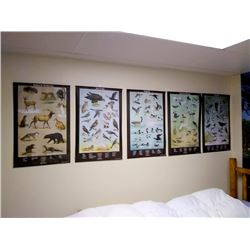 SET OF X  7  OFFICIAL PENNSYLVANIA GAME CHARTS / WALL DISPLAYS
