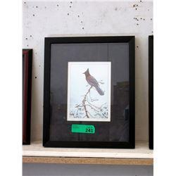 Framed Luke Raffin Print - Steller's Jay