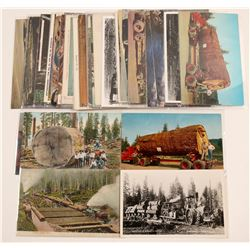 Logging - General Western United States   (105150)