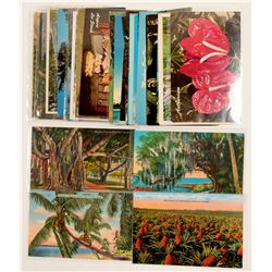 Hawaii Flower Postcards   (103260)