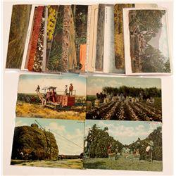 Farming Postcards   (105356)