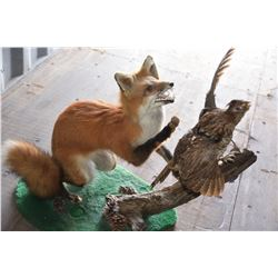Fox and Grouse Taxidermy Mount