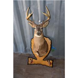 Deer Head Taxidermy Mount