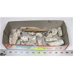 BOX OF ASSORTED FOSSILIZED SHELLS