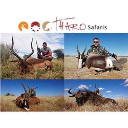 Tharo Safaris