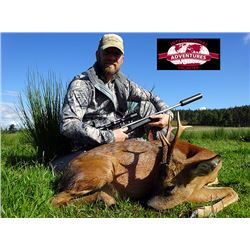 International Adventures Unlimited - Roe Deer